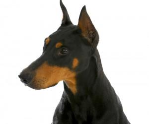 Seguros para perros peligrosos