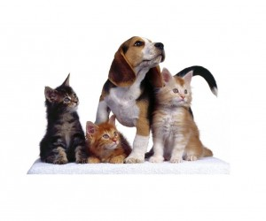 Seguro para perros y gatos