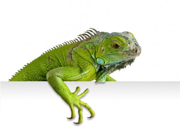 Seguros para animales exoticos