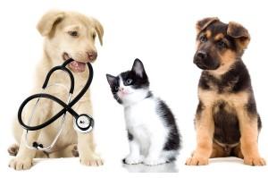 Resultado de imagen para seguros de mascotas