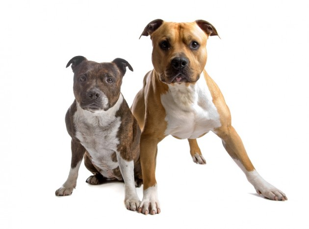 Seguros de rc para perros peligrosos