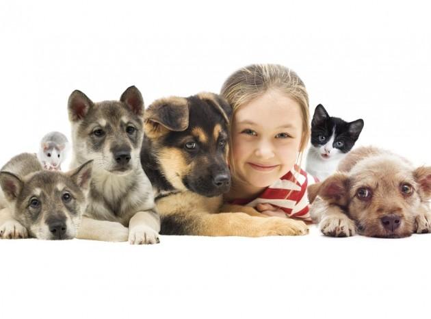 Seguros de perros