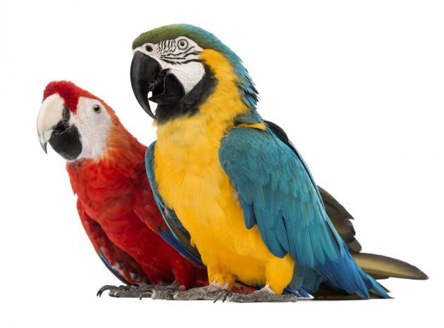 Seguro para animales exoticos