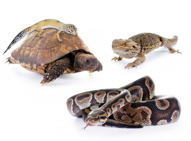 Seguro animales exoticos